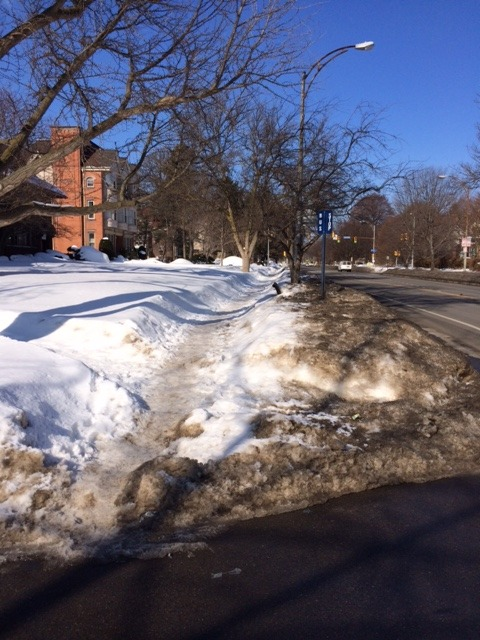 Bus stop on East Ave, 3/9/15 [Photo: Renee Stetzer]